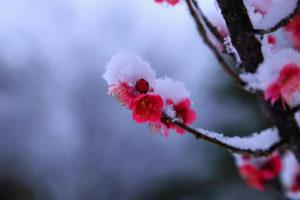 2月の茶杓の銘 春雪 茶道