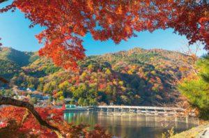 10月の茶杓の銘 嵐山
